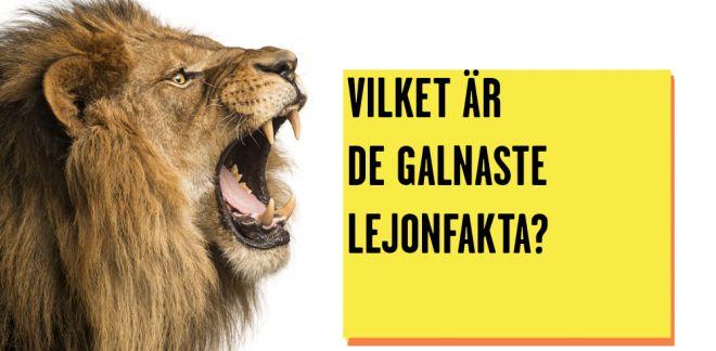 Vilket är de galnaste lejonfakta?