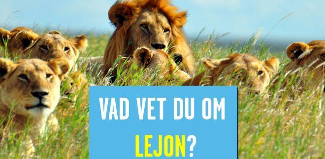 Vad vet du om lejon?