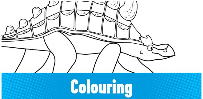 Colour-in the Ankylosaurus