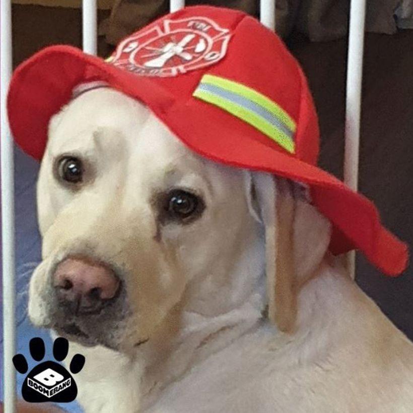 Boomerang Pets In Hats Challenge: Angel