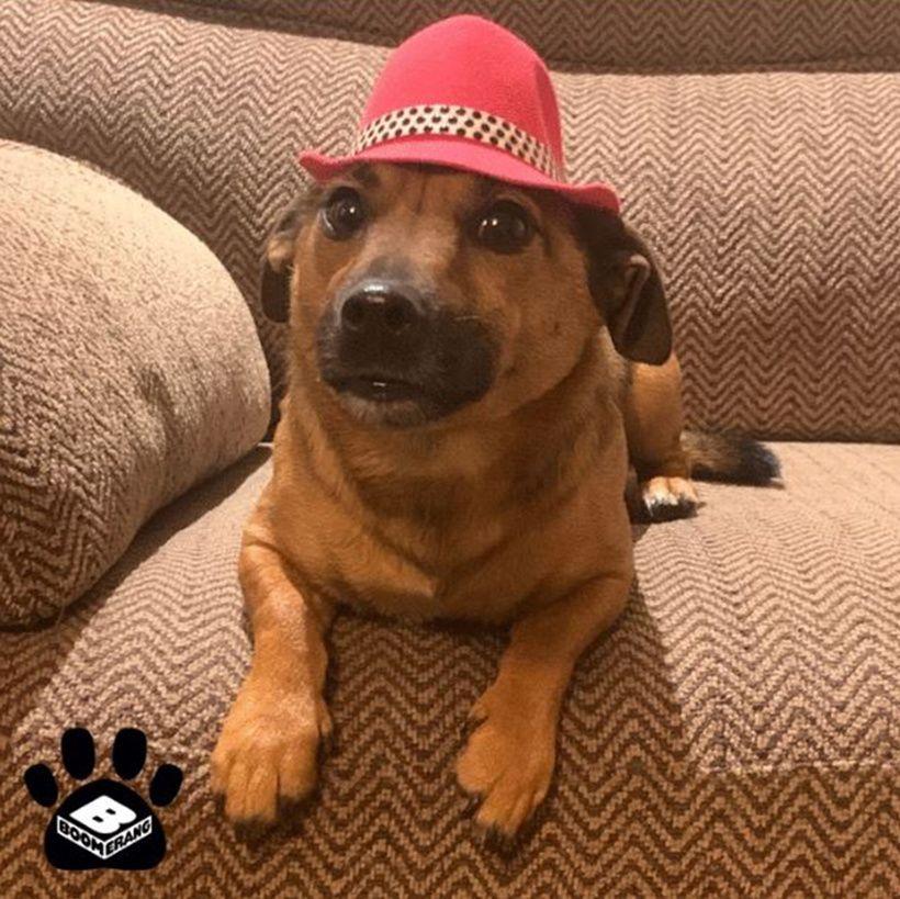 Boomerang Pets In Hats Challenge: Dusty Dude