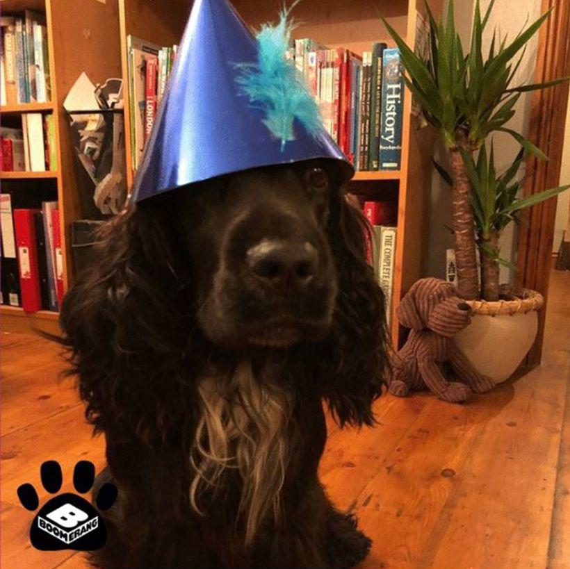 Boomerang Pets In Hats Challenge: Buddy