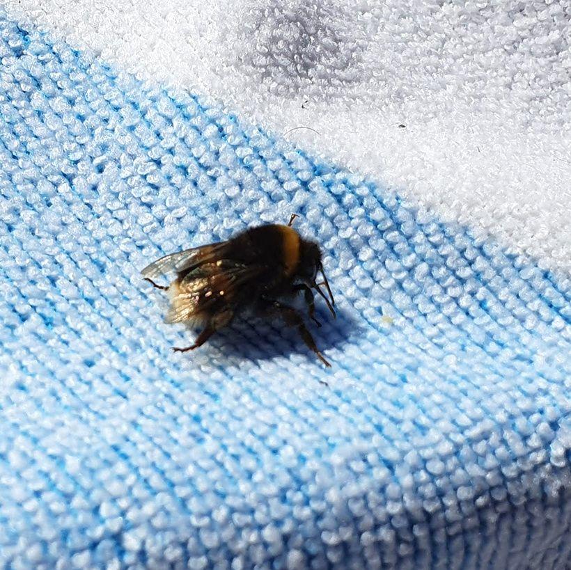 Boomerang Pet of the Week: Bumblebee
