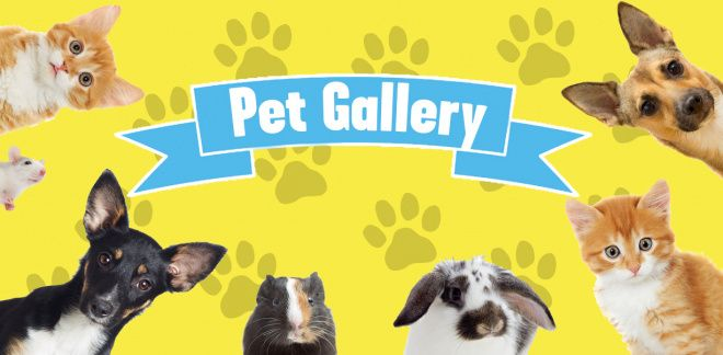 Check out the cutest pets!