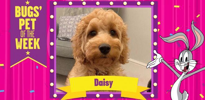 Meet Josh's Pet, Daisy