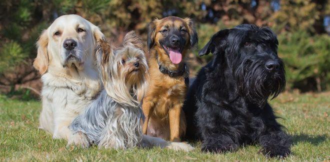 Jaką rasą psa jesteś?