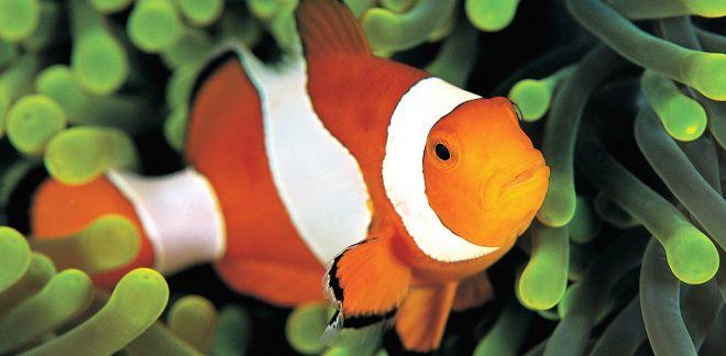 Którą rybę lubisz najbardziej?