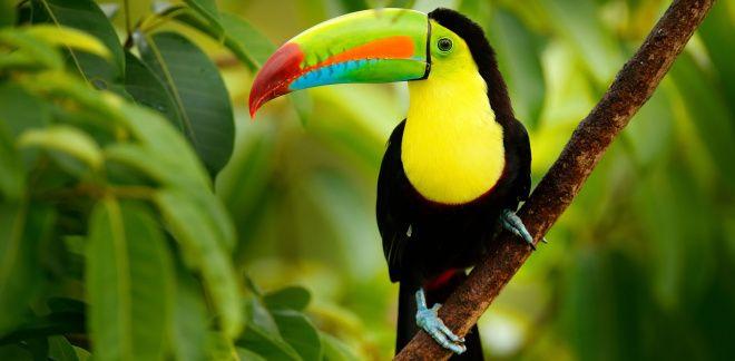 Które ptaki lubisz najbardziej?