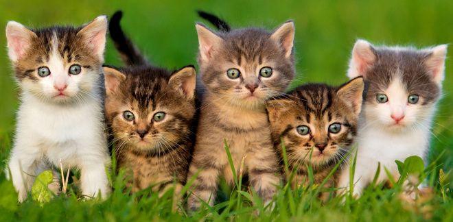 Ce fel de pisică ești?