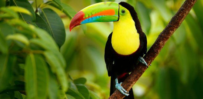 Care sunt păsările tale favorite?