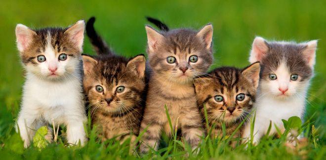 Узнай, какой из тебя кот или кошка!