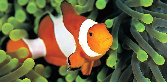 Какая из рыб твоя любимая?