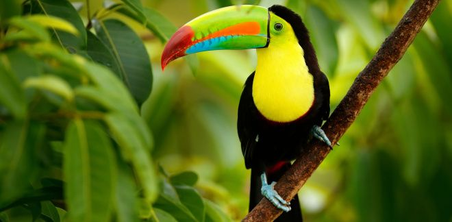 Какая из птиц твоя любимая?