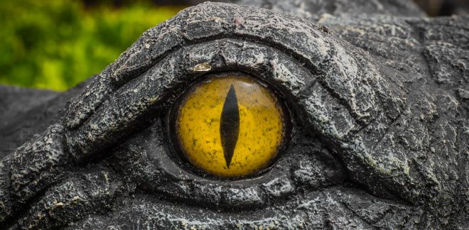Van welk dier zijn de ogen?