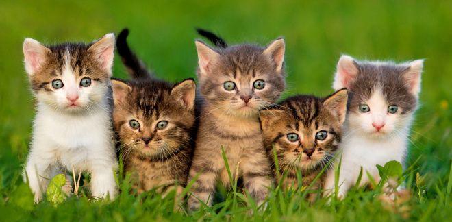 Welcher Art Katze bist du?
