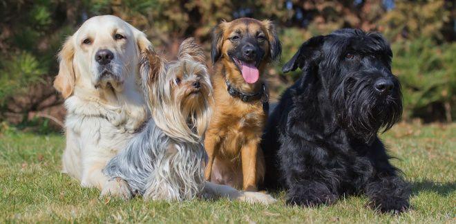 Welche Art Hund wärst du?