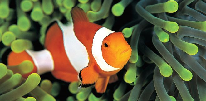 Was sind deine Lieblingsfische?