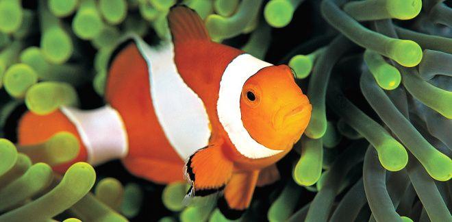 Wat zijn je favoriete vissen?