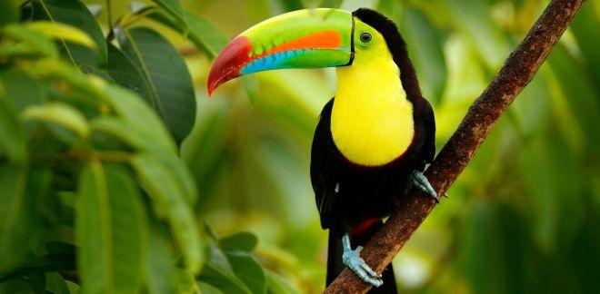 Wat zijn je favoriete vogels?