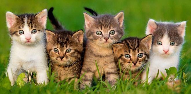 Wat voor type kat ben jij?