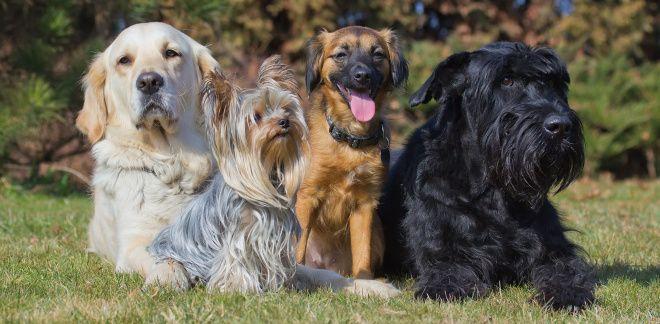 Milyen fajtájú kutya vagy?