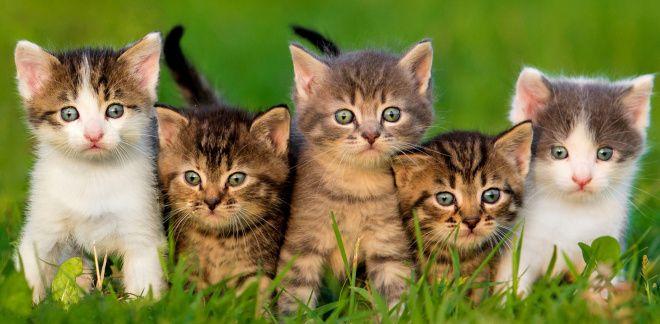 Milyen fajtájú macska vagy?