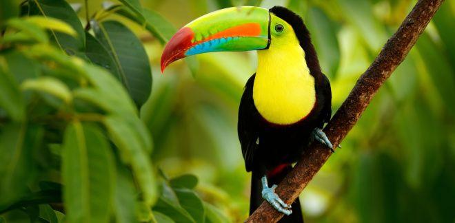 Mely madarak a kedvenceid?