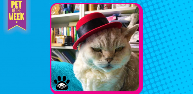 The best of the Pets in Hats Challenge - Let's Create!