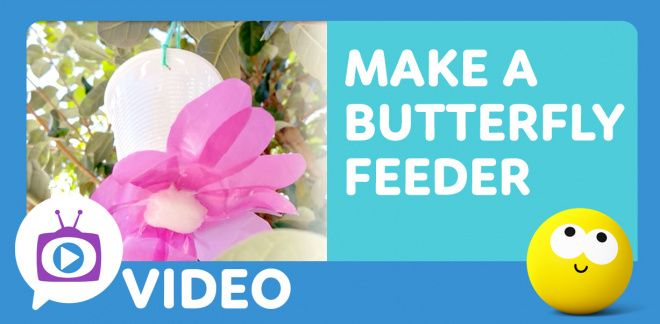 How to Make a Butterfly Feeder - Cartoonito Club